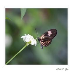 Vlinders 6