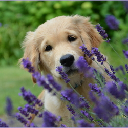 So Cute......