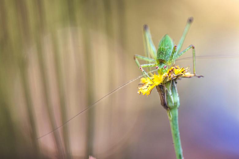 Flower hopper - Vanmorgen even op pad geweest en toen kwam ik dit tafereel tegen.