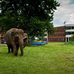Olifanten in Stadspark