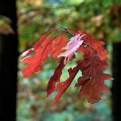 Herfst illusie