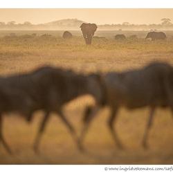 Amboseli Traffic
