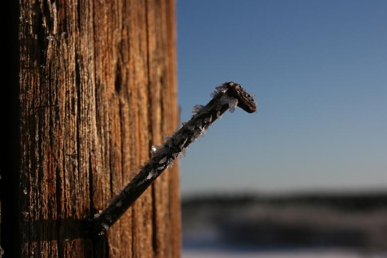 rijp - Genomen in Zweden, bij -20 graden. Rijp was overal te vinden! Het was zo koud dat er regelmatig lucht op mijn lens bevroor.
