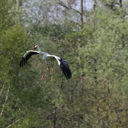 Ooevaar in vogelvlucht