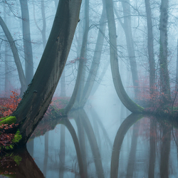 The bent ones in thick fog II