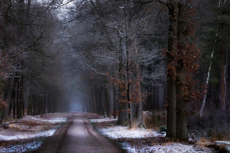 Dutch scenery -