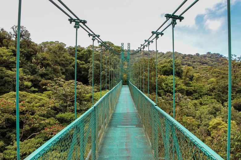 Hangende brug in Monteverde Cloud Forrest - Zicht vanaf de hangende bruggen boven het bos van het Monteverde Cloud Forrest, Costa Rica.