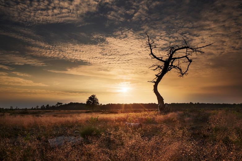 Veluwse zonsondergang
