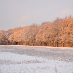zonsopkomst in een besneeuwd bos