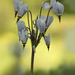 Flamy flowers - zoomdag 17 mei