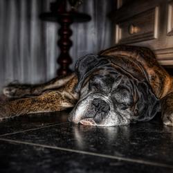 Hondenleven...