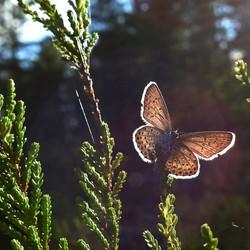vlindertje in tegenlicht