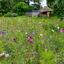 Kleurige tuin in Zwiep
