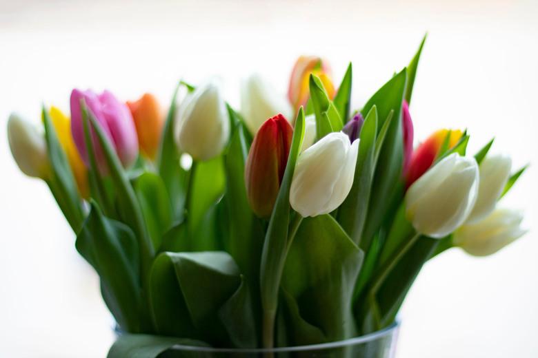 Tulpen - Stilleven van Tulpen
