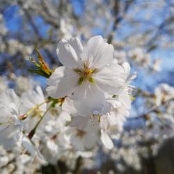 Voorjaar!!