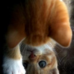 Spiegeltje spiegeltje....