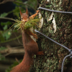 Winter is coming, moet de eekhoorn denken :)