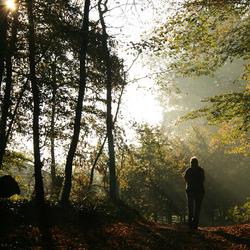 herfst vierlingsbeek-1.jpg