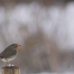 vogels in de tuin 2