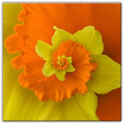 Flower -remake-