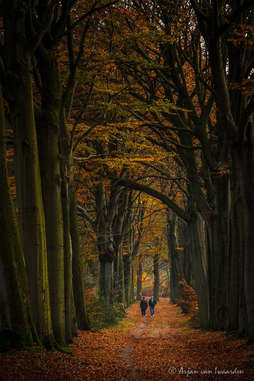 Autumn walk -