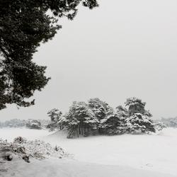 Wekeromse Zand met sneeuw
