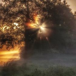 Zonsopkomst tussen de bomen