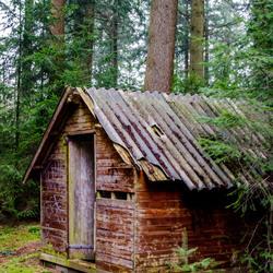 huis in bos
