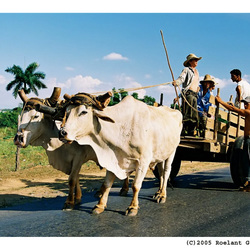 Spankracht in Cuba