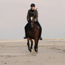 Horse riding on the beach 4