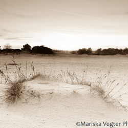 Hollands desert