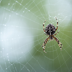 De spin in het web