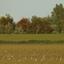 Een veld vol Wulpen