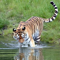Dat water is lekker