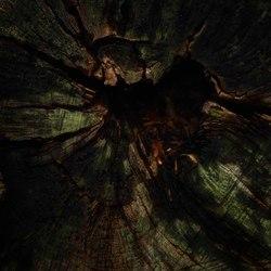 The dark forest....