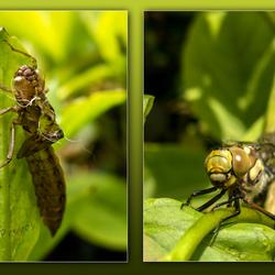 geboorte libelle