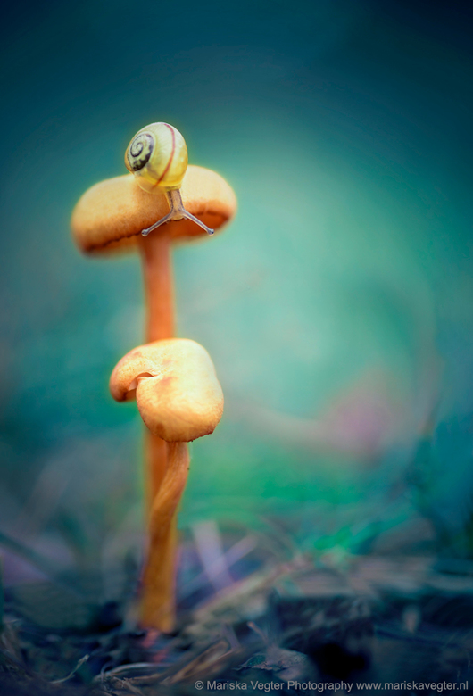 No mushroom is too high for me to climb