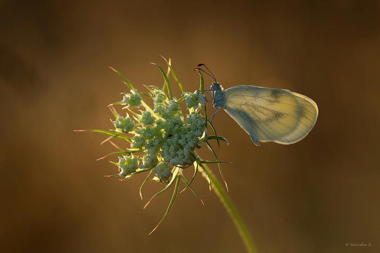 """boswitje - Wat een schattig vlindertje! <br /> Afgelopen paar dagen genoten van de vele vlindertjes in het zuiden van België. <img  src=""""/images/smil"""