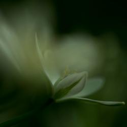 Impression des fleurs
