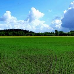 Contrast landschap