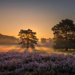 Brunssummerheide in de ochtend