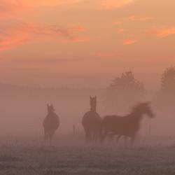 Schouwspel bij mist en opkomende zon