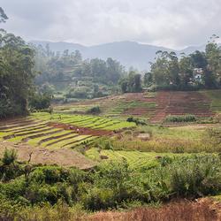 terassen landbouw 1903048523Rmw