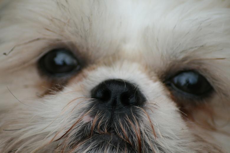 Miss Amy - Onze pup was achterhuis ff aan het spelen toen ze ff 2 sec een moment voor me nam om me aan te kijken... Snel een close-up foto genomen.<br