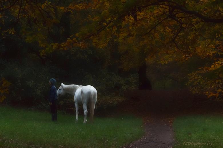 Wat zie ik?  - Aandacht van paard en eigenaar wordt getrokken door spelende honden, denk ik, ha ha. Het werd al een beetje donker toen dit paard uitge