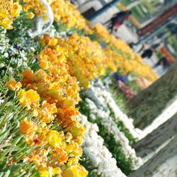 flower pover