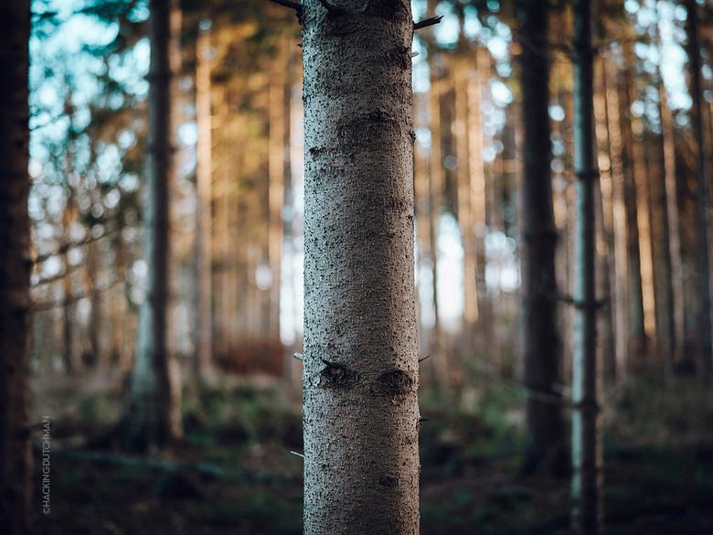 Boom - Deel van een boom.<br /> <br /> <br /> <br /> <br /> ©MotionMan 2021
