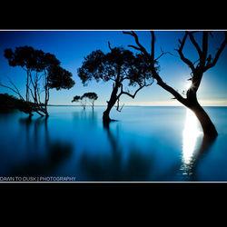 Mangrove Star