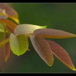 notenbladeren