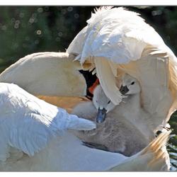 veilig onder moeders vleugels